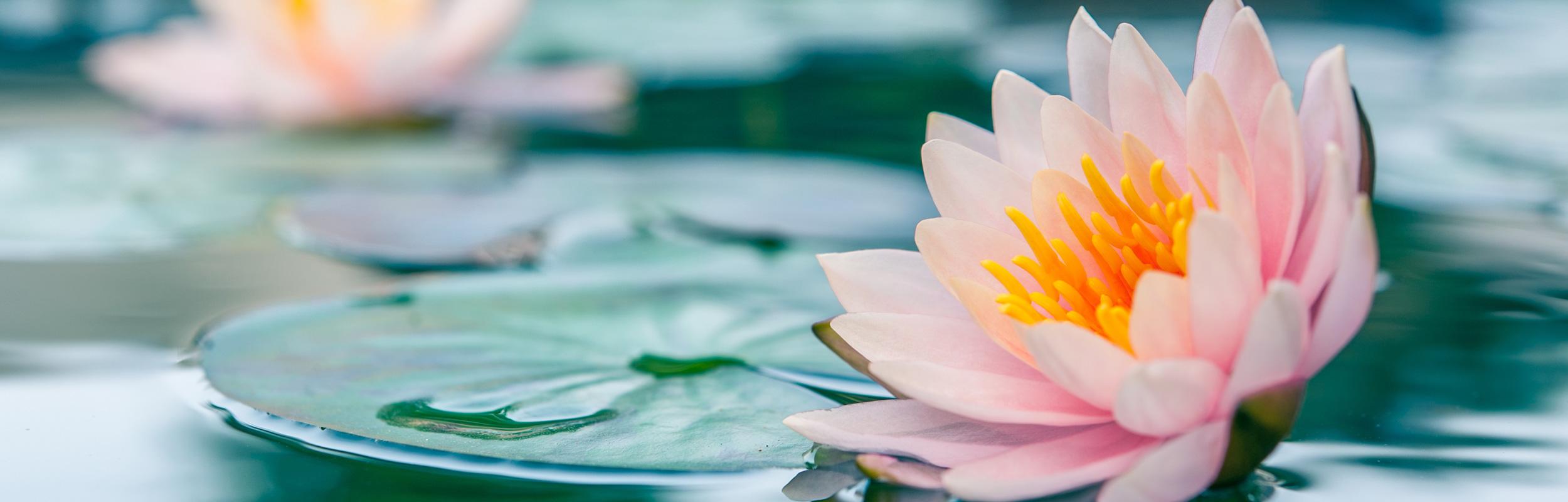 tammera_slider_lotus